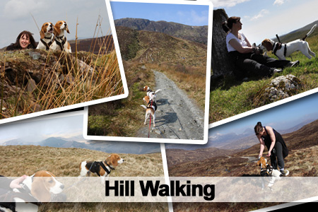 Hill Walking Beagles