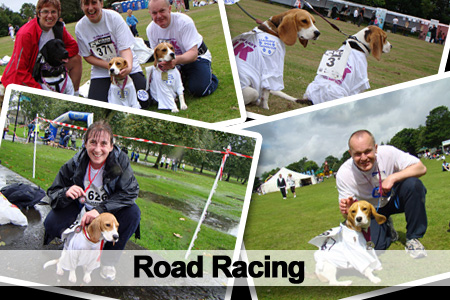 Road Racing Beagles